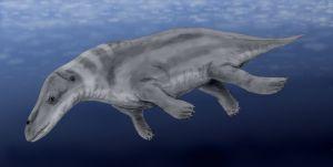 Rhodocetus